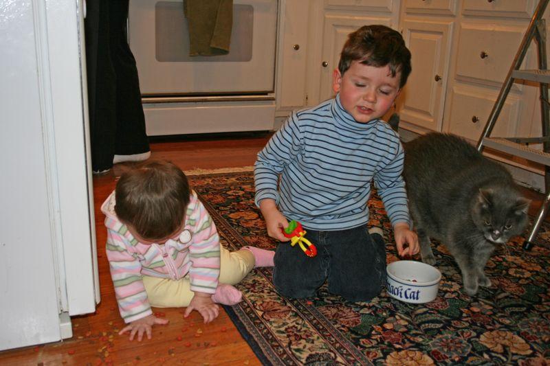 Cat food clean-up