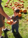 A_little_pumpkin_for_a_little_boy