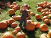 Pumpkin_patch_102107